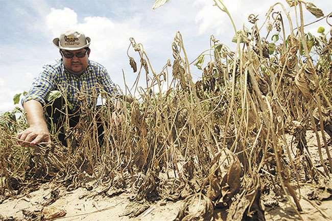 En la última campaña de verano la sequía disminuyó la producción de unas 500.000 toneladas de soya
