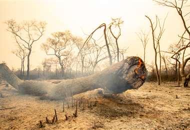 El fuego se reavivó en zonas donde la lluvia no humedeció todo el suelo. Foto Archivo