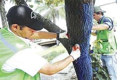 Funcionarios del municipio proceden al lavado de los árboles