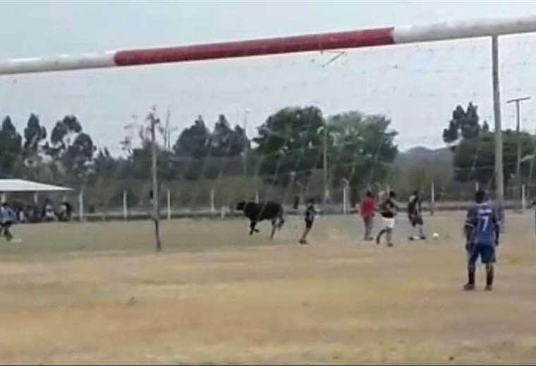Un toro interrumpió los partidos de un torneo en Argentina