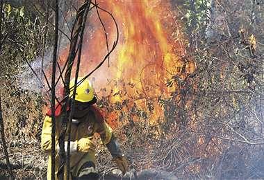 El fuego consumió casi 4 millones de hectáreas