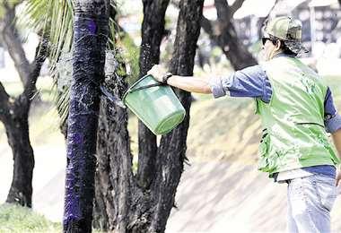 Rige el silencio y en la capital cruceña lavan árboles pintarrajeados