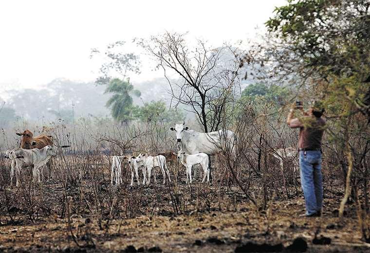 Según un informe de la Fundación Tierra, los incendios en la Chiquitania afectaron a unas 720.899 hectáreas de tierras agropecuarias. Foto: Jorge Uechi
