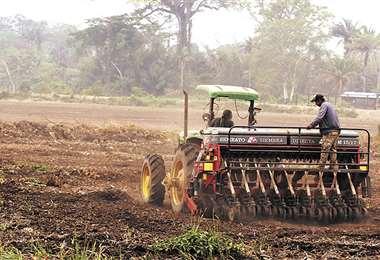 La mayor capacidad de producción agrícola se centra en la provincia Marbán de Beni. Foto: Rolando Villegas