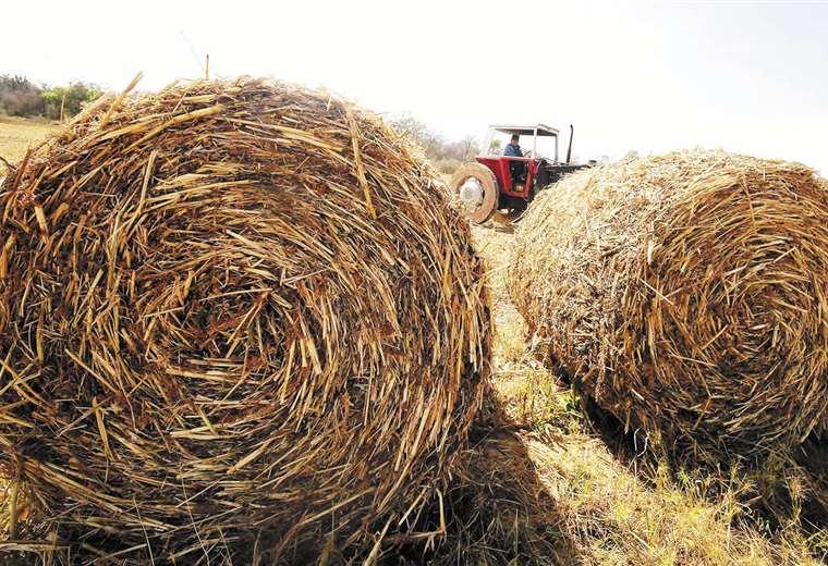 Proveedoras prevén mayor demanda de forraje y de semillas | Hernán Virgo