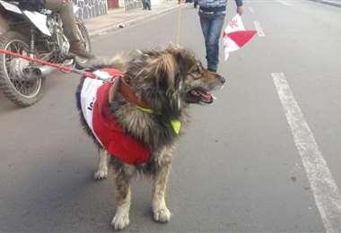 El can en las calles de la Villa Imperial I Foto: El Potosí.