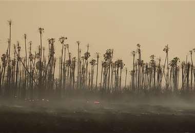 El Parque Nacional Otuquis es una de las áreas protegidas que mayores daños ha sufrido en su ecosistema debido a los incendios forestales. FOTO: JORGE UECHI Y CARLOS QUINQUIVÍ