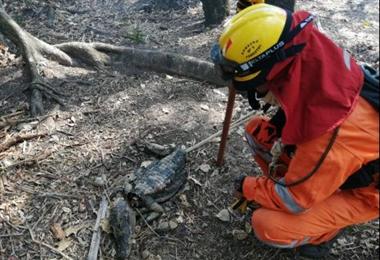 Incendios en la Chiquitania está controlados