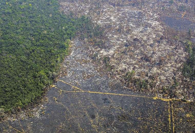 Empresas forestales y traficantes de tierras están detrás de la destrucción masiva de bosques. Foto: AFP