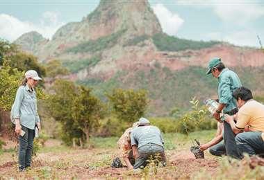 Voluntarios plantan arbolitos de diferentes especies en el municipio de Roboré