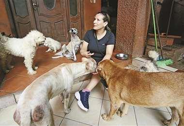 Los rescatados, 26 perros y 12 gatos, esperan encontrar familias responsables. Foto: Jorge Gutiérrez