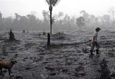 La lluvia cae sobre un campo arrasado por las llamas. Foto Internet