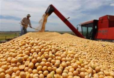La soya, uno de los productos estrella del agro. Foto Internet