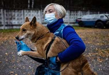 Los canes tienen un olfato particularmente sensible