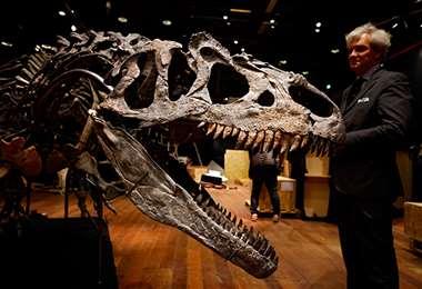 El considerado abuelo del T-rex. Foto Internet