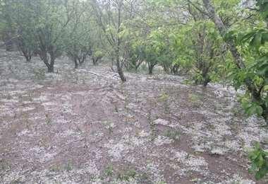 Hay al menos 20 hectáreas de cultivos afectadas