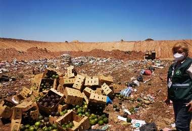 El Senasag decomisa y destruye 1.500 kilos de paltas