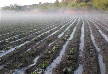 Los efectos de la granizada son notorios en los cultivos /Foto: ACLO