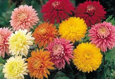 Las flores son adquiridas en estas fechas