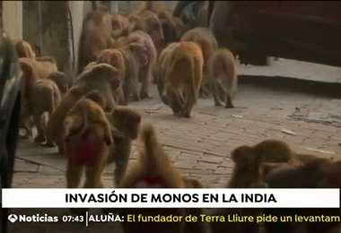 Los monos se cuentan por miles. Foto captura