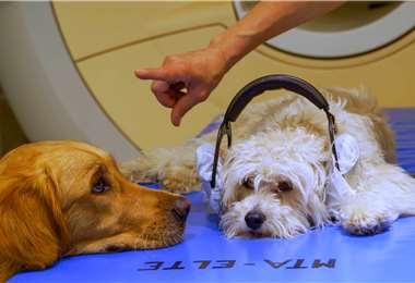Dos perros que participaron en el estudio. Foto AFP