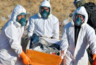La pandemia sigue manteniendo a Bolivia en alerta. Foto: APG