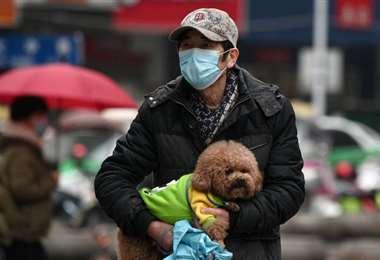 El estudio indica que los perros son uno de los animales que pueden contagiarse