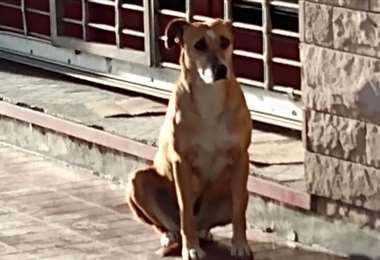 Bianca, la perra que esperó durante días a su dueña fallecida