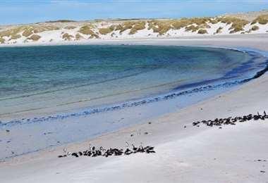 Las Malvinas libres de minas. Foto Internet