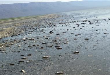 En la laguna Concepción miles de peces se han muerto por falta de agua