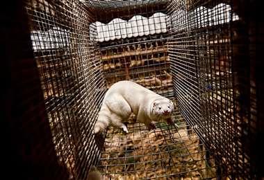 Ordenan el sacrificio de 1.000 animales que la granja donde se detectó el caso