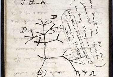 """El dibujo del """"árbol de la vida"""" en uno de los dos cuadernos desaparecidos. Foto AFP"""