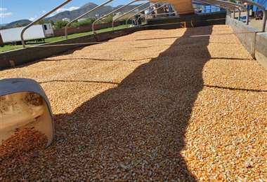 El grano fue secuestrado en Tarija/Foto: Aduana