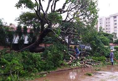Árbol caído en la capital cruceña/Foto: AlcaldíaÁrbol caído en la capital cruceña/Foto: Al