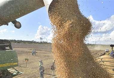 En la actualidad el precio de la soya se cotiza a 430 dólares la tonelada/Foto: APG
