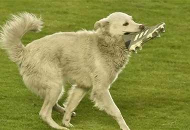 El can fue el protagonista del The Strongest - Nacional Potosí. Foto: APG Noticias