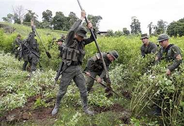 Colombia dice haber batido récord de erradicación de narcocultivos por segundo año consecu