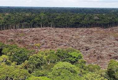 Si se tala demasiado la selva amazónica, podría haber profundas consecuencias