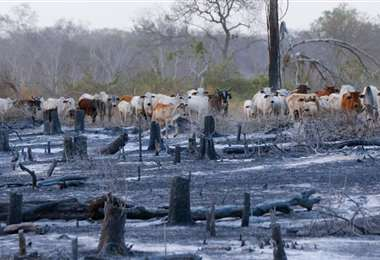 Este año se quemaron más de 2 millones de hectáreas. Foto referencial: Ipa Ibañez