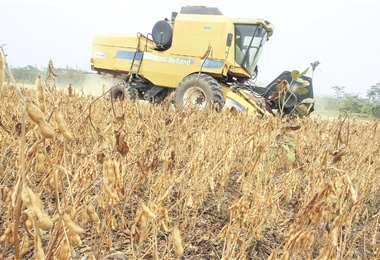 La cosecha de soya comienza de forma extendida la próxima semana en todo el departamento.