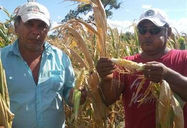 Productores muestran cómo quedaron algunos cultivos