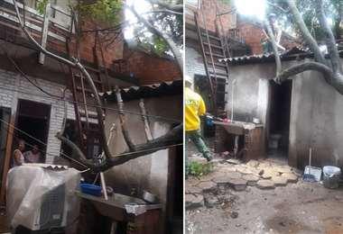 El árbol terminó por afectar el tejado de una vivienda