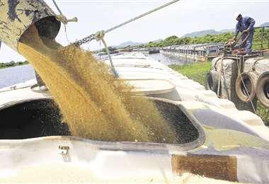 El Gobierno liberó las exportaciones favoreciendo el comercio exterior de productos como la soya. Foto: HERNAN VIRGO