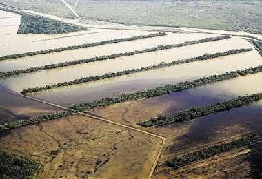La soya es el principal producto afectado por el desborde de los ríos.
