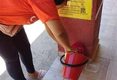 Voluntarios colocan comederos para canes en Yapacaní. Foto: Soledad Prado