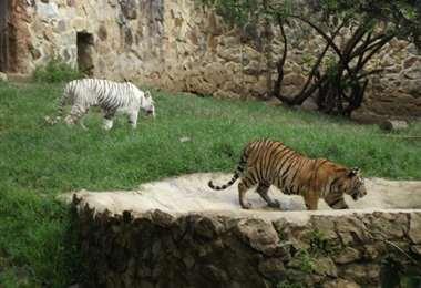 zoológico de Colombia