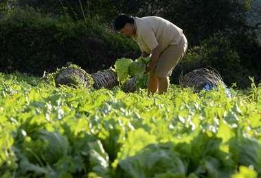 Los productores de los valles señalan que los precios están inestables. Foto: Hernán Virgo