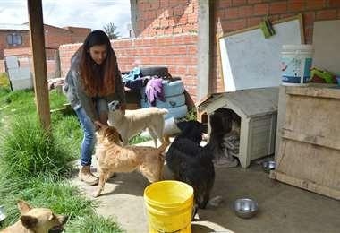 Refugios de animales en La Paz I Foto: archivo.