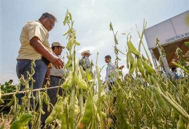 La soja es empleada para la producción de biocombustibles.
