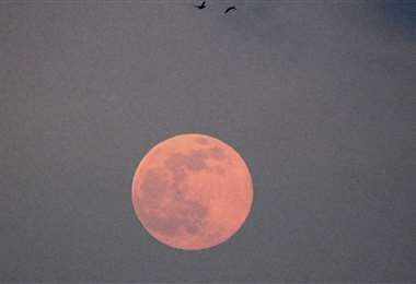 Imagen referencial de la luna gusano (Foto: AFP)